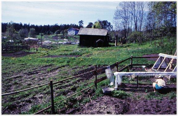 Un terrain agricole loué à des citadins en Union soviétique